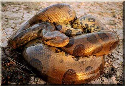 Какие змеи самые большие в мире