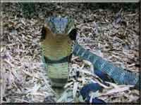 Самые самые рекорды в мире змей