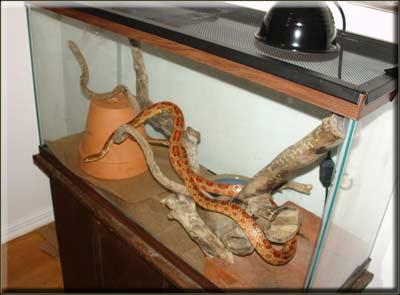 Типы террариумов для змей