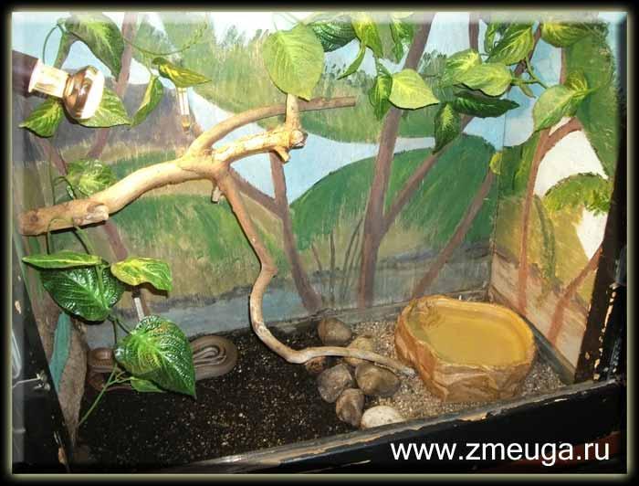 Террариум для змей, фото 2