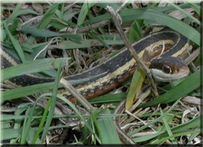 Какие виды змей бывают - c153f